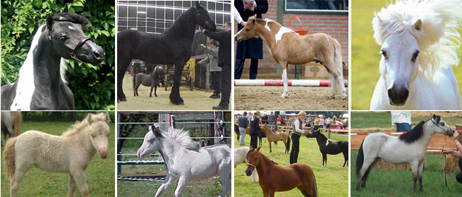 Nederlands Mini Paarden Registratie Stamboek